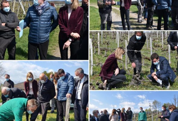 Sur le terrain pour constater les dégâts du gel sur l'arboriculture et la viticulture